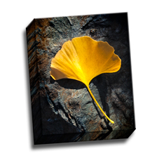 Image of Canvas Print 8 x 10 Gallery Wrap