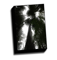 Image of Canvas Print 8 x 12 Gallery Wrap