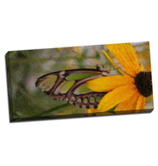 Image of Canvas Print 38 x 18 Gallery Wrap
